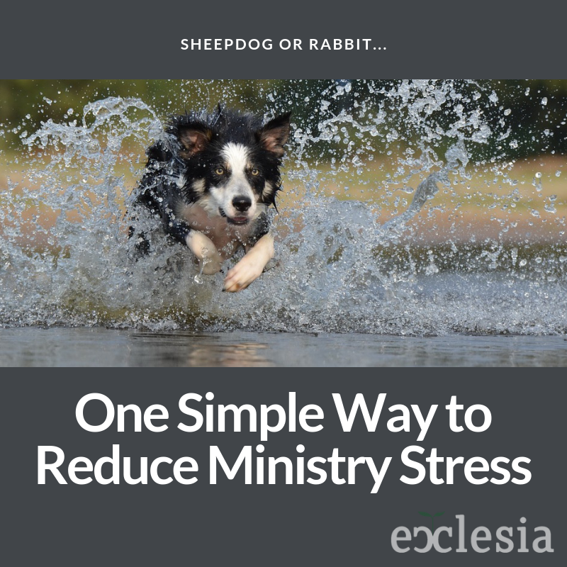 One Simple Way to Reduce Ministry Stress- Be a Sheepdog, Not a Rabbit.